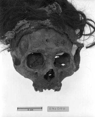 trophy-head-skull-02